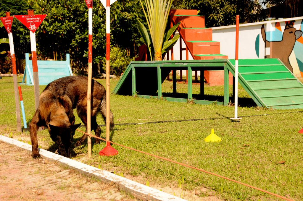 NPA landmine detection dogs