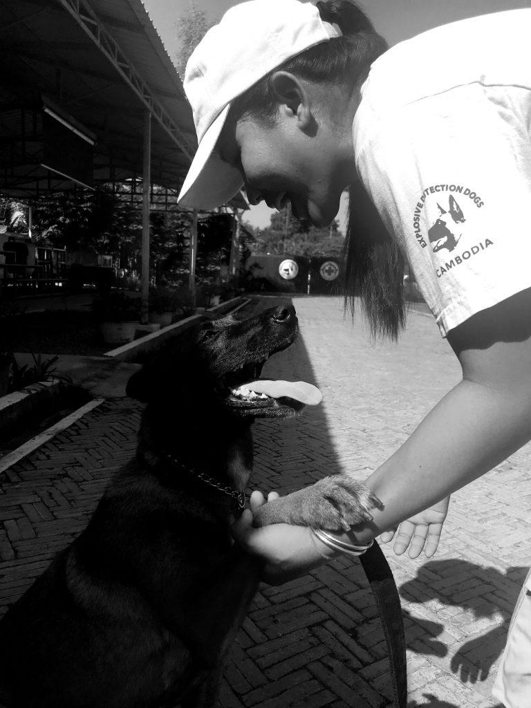 NPA landmine detection dog
